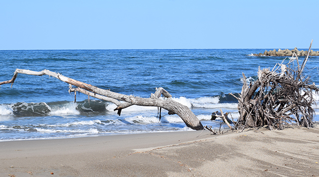 海岸に打ち上げられる流木